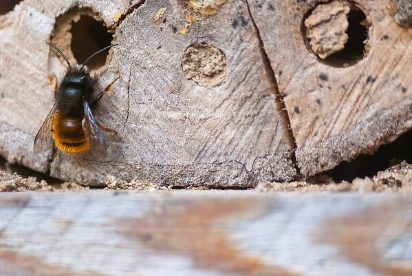 Native Gardening with Compassion: An Interview with Benjamin Vogt | We don't understand native bees that well, but we need to.