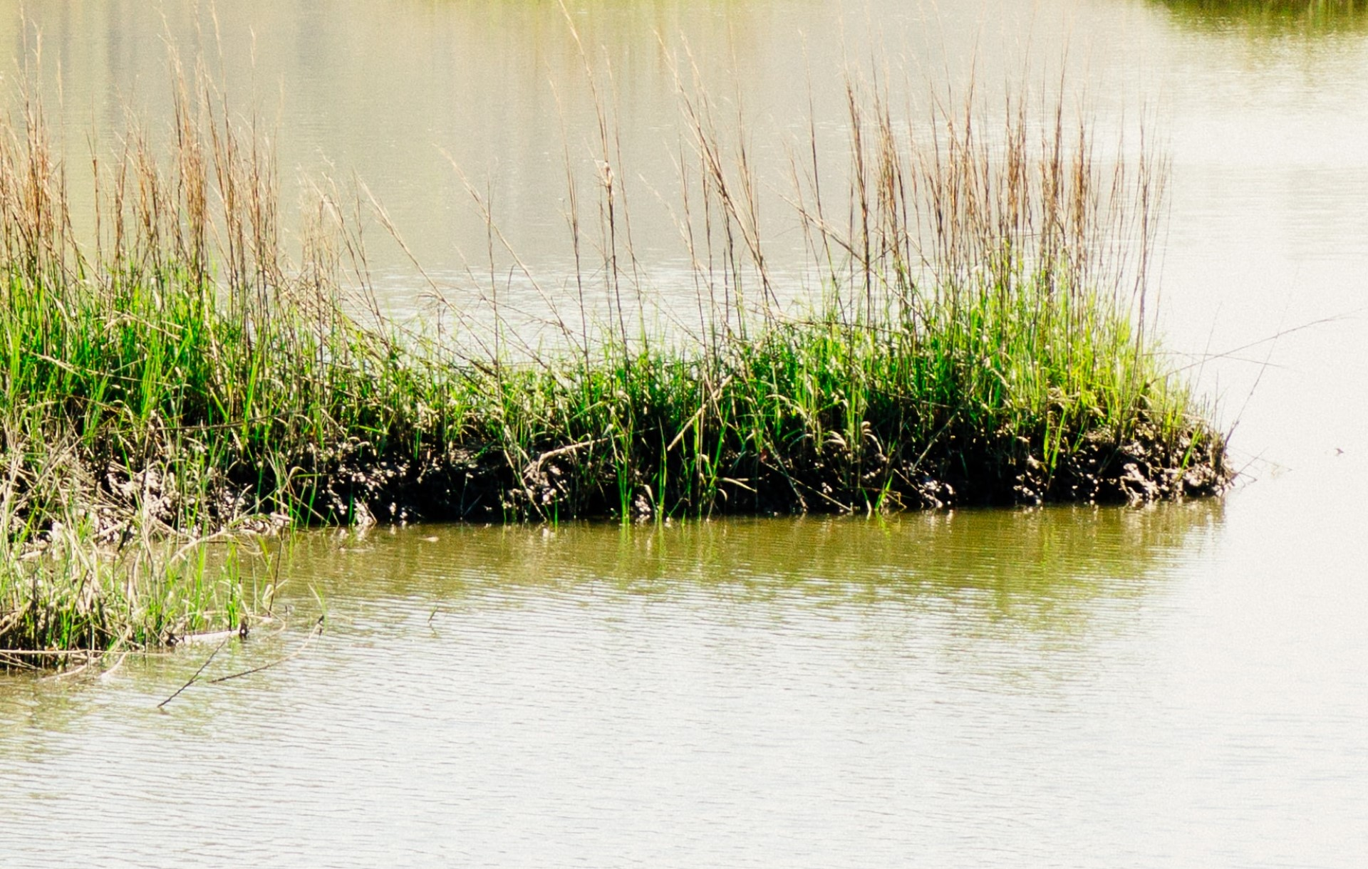 What Is a Floating Wetland and Why Should You Care? | A floating wetland is a relatively new piece of technology that helps us clean and purify water.