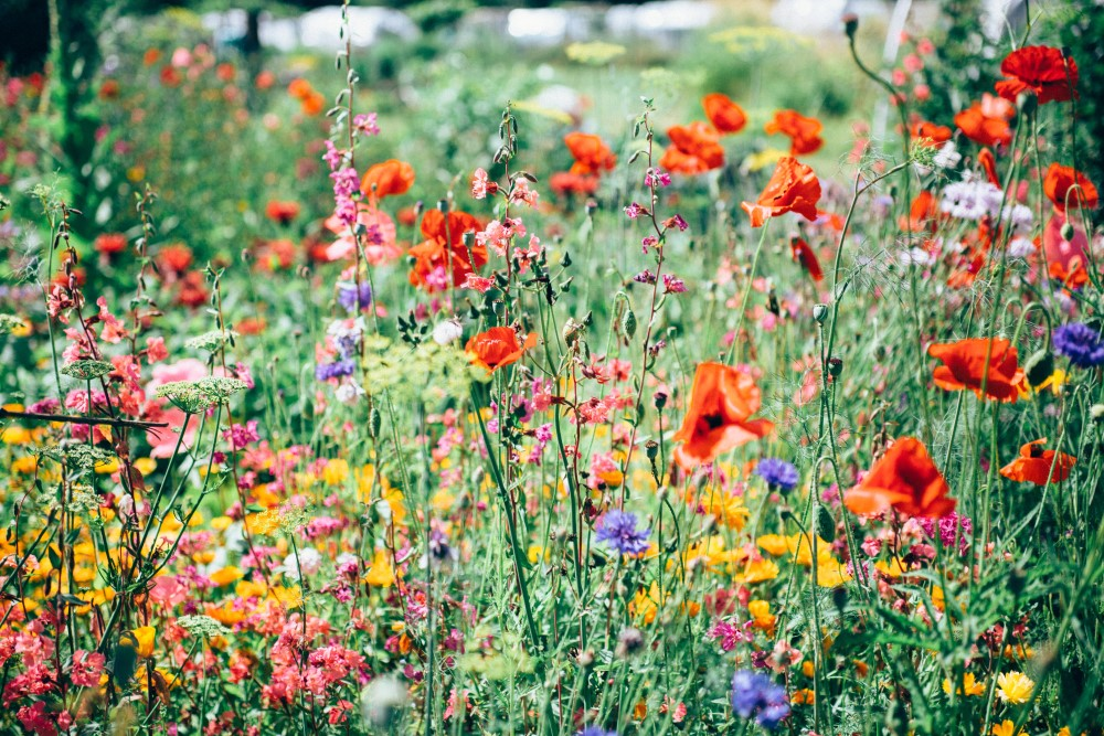 What You Should Know About Gardening for Pollinators | Today's gardens don't provide the right food for pollinators and give them little respite on their long journeys.