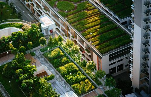 What You Need to Know About Green Roofs and the Environment | A green roof is more than a few containers on top of a building; it's a complex system of interconnected elements.