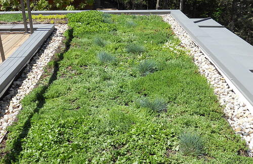 What You Need to Know About Green Roofs and the Environment | If you're ready to do the environment a solid and get more green roofs in your life, let's start now.
