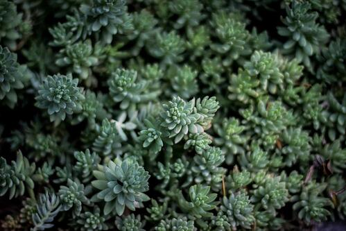What Is Green Roof Technology and How Does It Work? | Green roof technology is a misleading term, because it is actually a complex of compatible technologies.