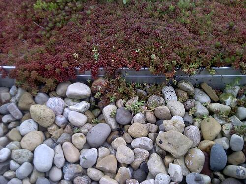 How to Make Your Green Roof Pay | By reducing the urban financial burden of stormwater and energy, green roofs can help pay themselves back.