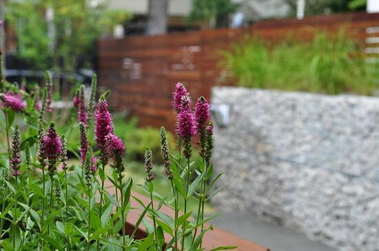 Should You Use Nativars in Your Garden? | A nativar is a new development of the horticultural industry that is a cultivar of a native plant.