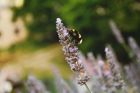 What Are Pollinators and Why Should You Care? | Pollinators suffer from a wide range of human activities, from deforestation to urbanization to pollution.