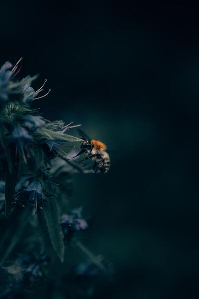 What Are Pollinators and Why Should You Care? | We must give pollinators the attention they deserve if we hope to clean up the environment and maintain our way of life.