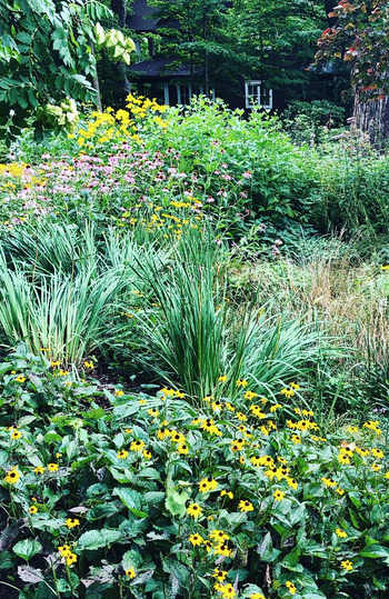 How to Choose the Right Locations for Planting Natives | We should use native plants in many areas, not just in gardens.