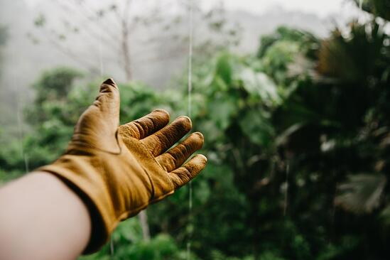 Everything You Need to Know About Stewardship | Stewardship means minimal but frequent interaction with green infrastructure to keep them effective and operational.
