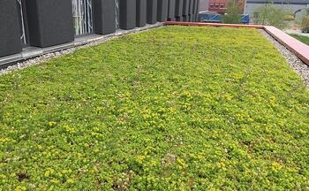What Is Stormwater Management and How Can You Help | Ecogardens offers an array of stormwater management systems, including rainwater harvesting, bioswales, green roofs and more.