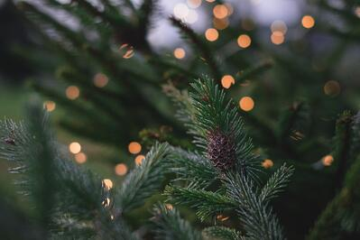 How to Make Outdoor Holiday Decorations More Sustainable | The first step in better holiday decorations is to stop using environmental polluters.