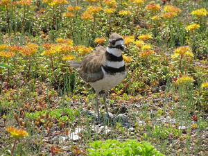 What You Need to Know About Urban Ecology Programs | You can choose to help pollinators or furry critters, plants or waterways, and so much more.