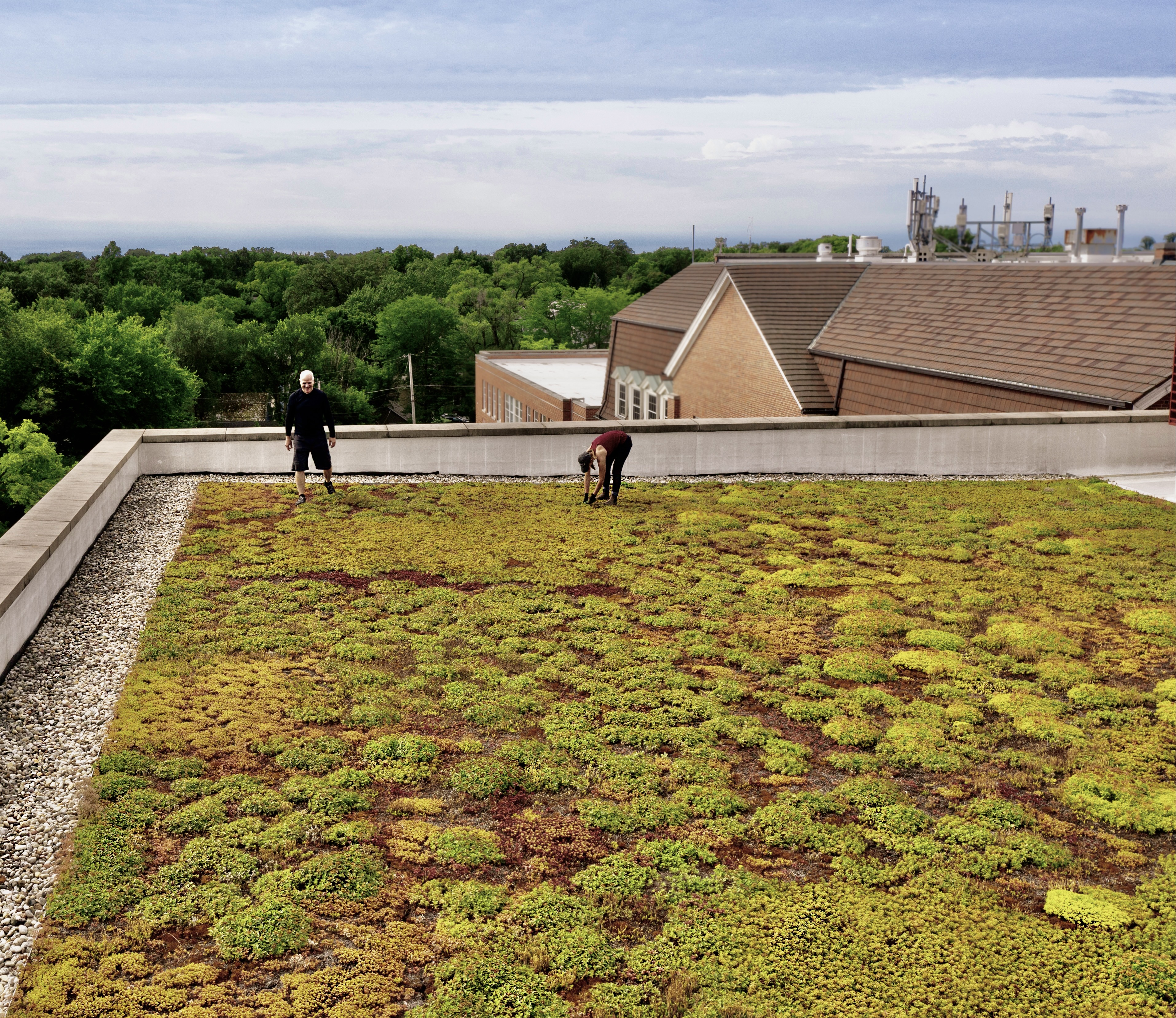The Top 4 Questions for Green Roof Stewardship to Maximize ROI