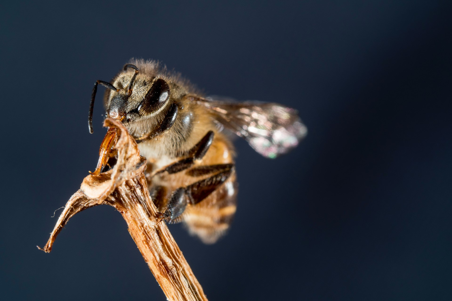 Beyond the Honeybee: Fighting of Behalf of Pollinators
