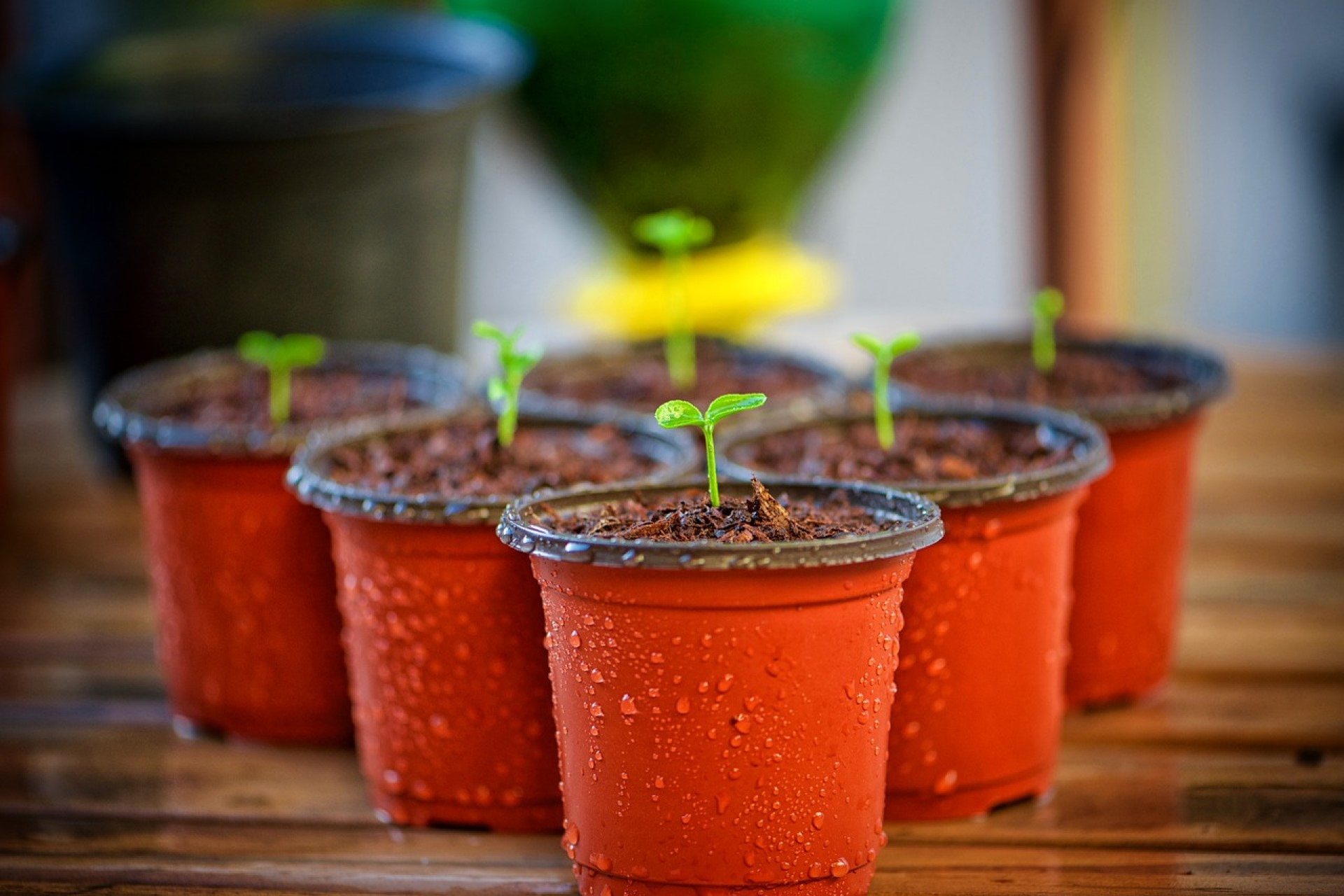 How to Make Biodegradable Pots Work for Green Roofing