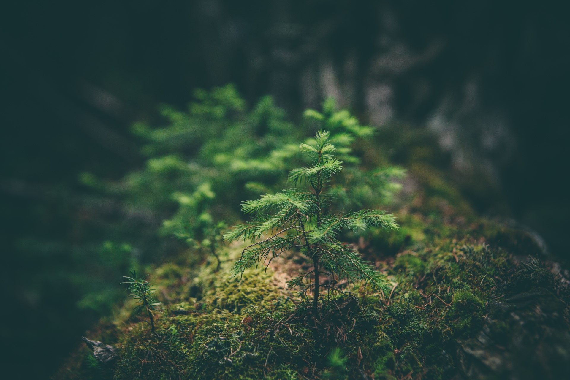 SPOTLIGHT: What Is Biophilia and Why Does It Matter?