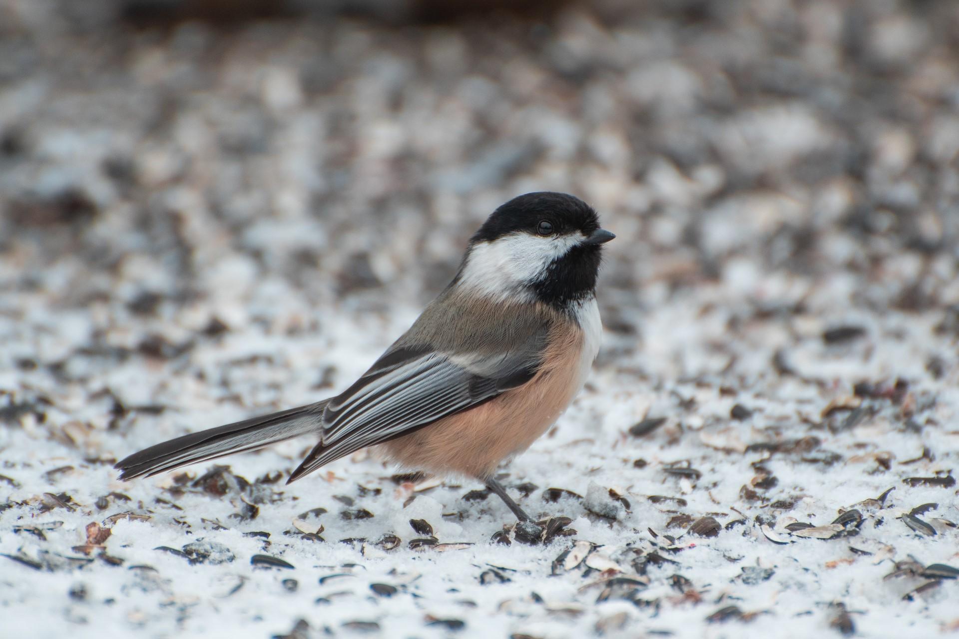 Chicago Proposes Bird-Friendly Ordinance