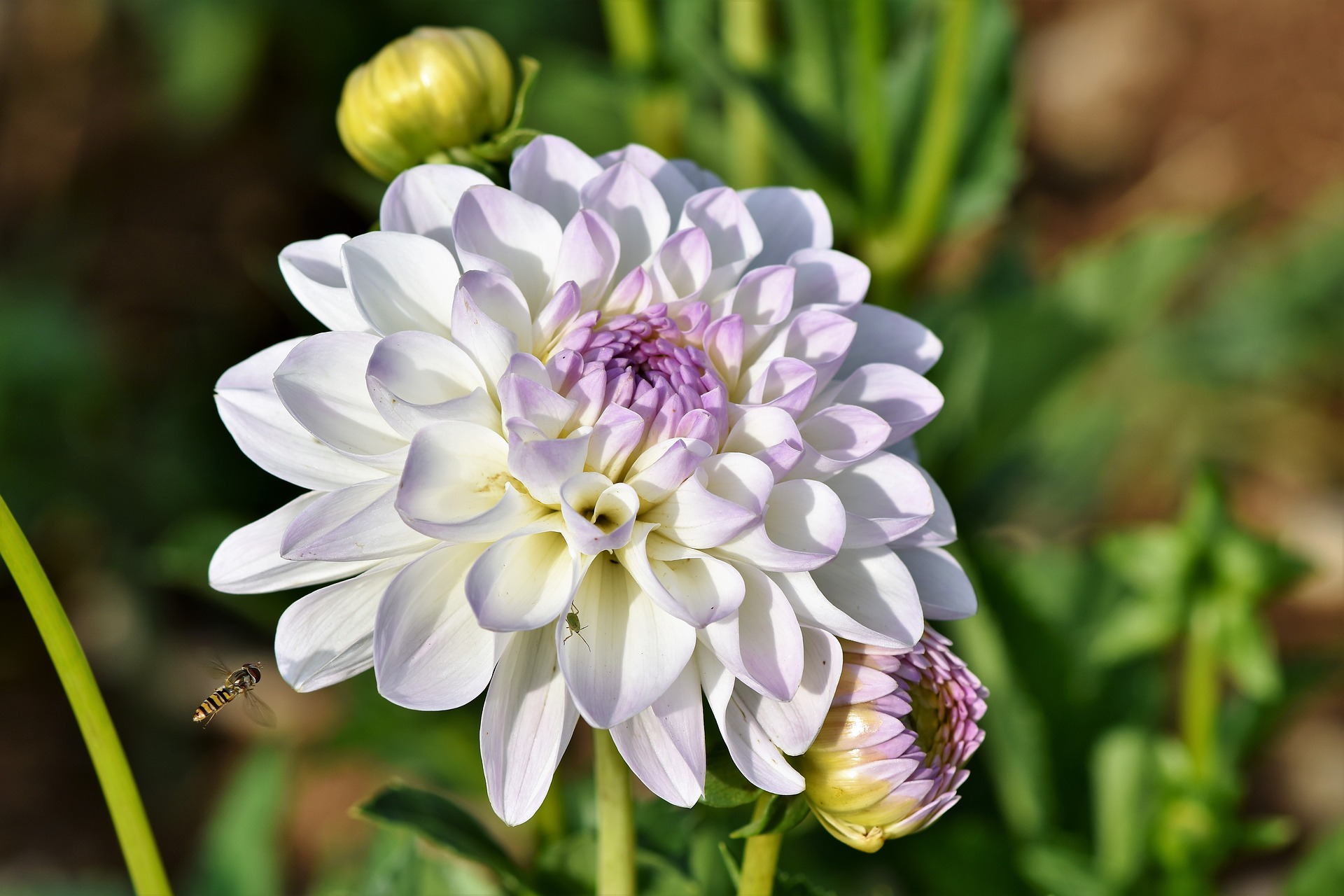 Should You Use Cultivars in a Pollinator Garden?