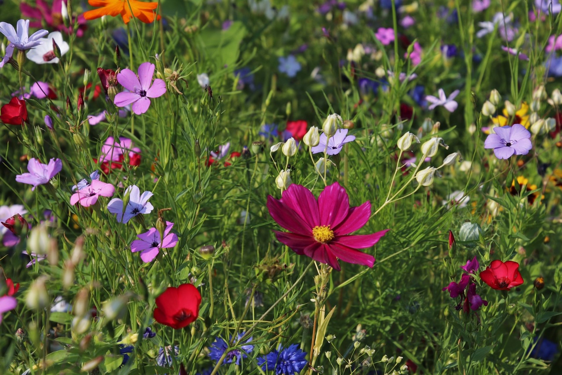 How To Increase Genetic Diversity Through Native Gardening