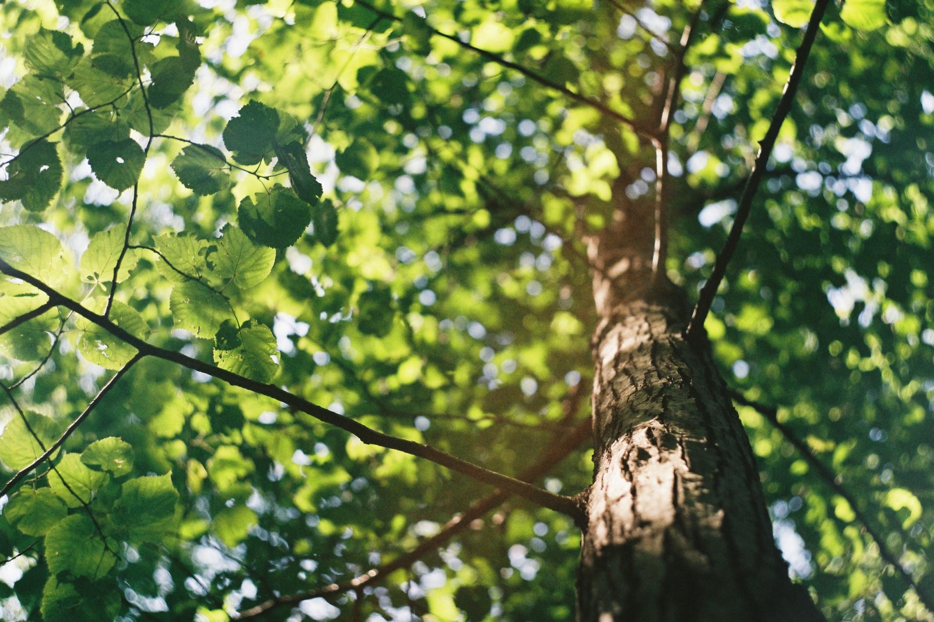 How Does Environmental Stewardship Impact Urban Ecology?