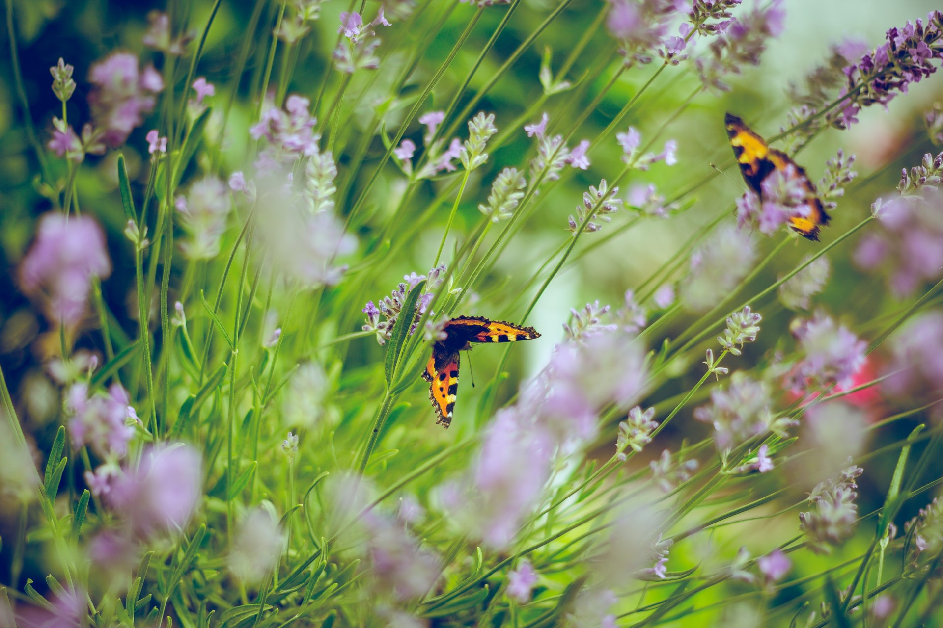 What You Should Know About Gardening for Pollinators