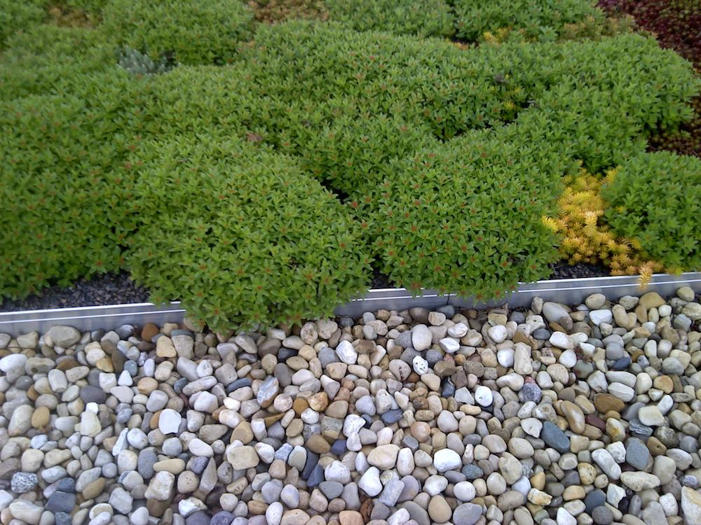 How to Figure Out What Your Green Roof Will Cost