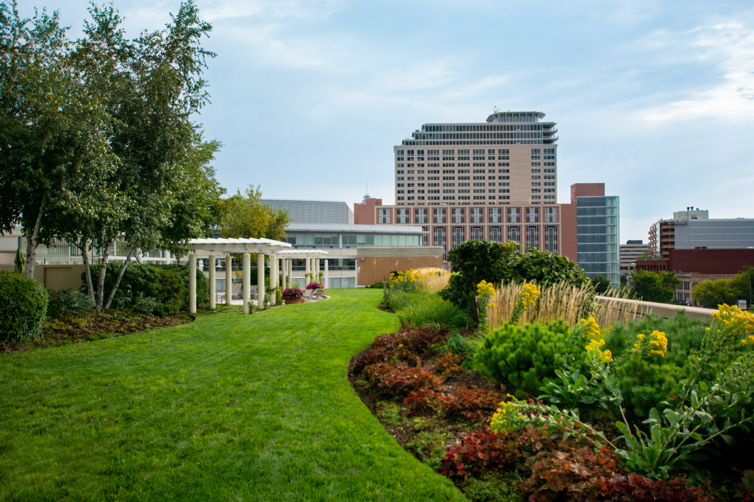 A Quick-Step Guide to Stewardship for Your Untended Green Roof