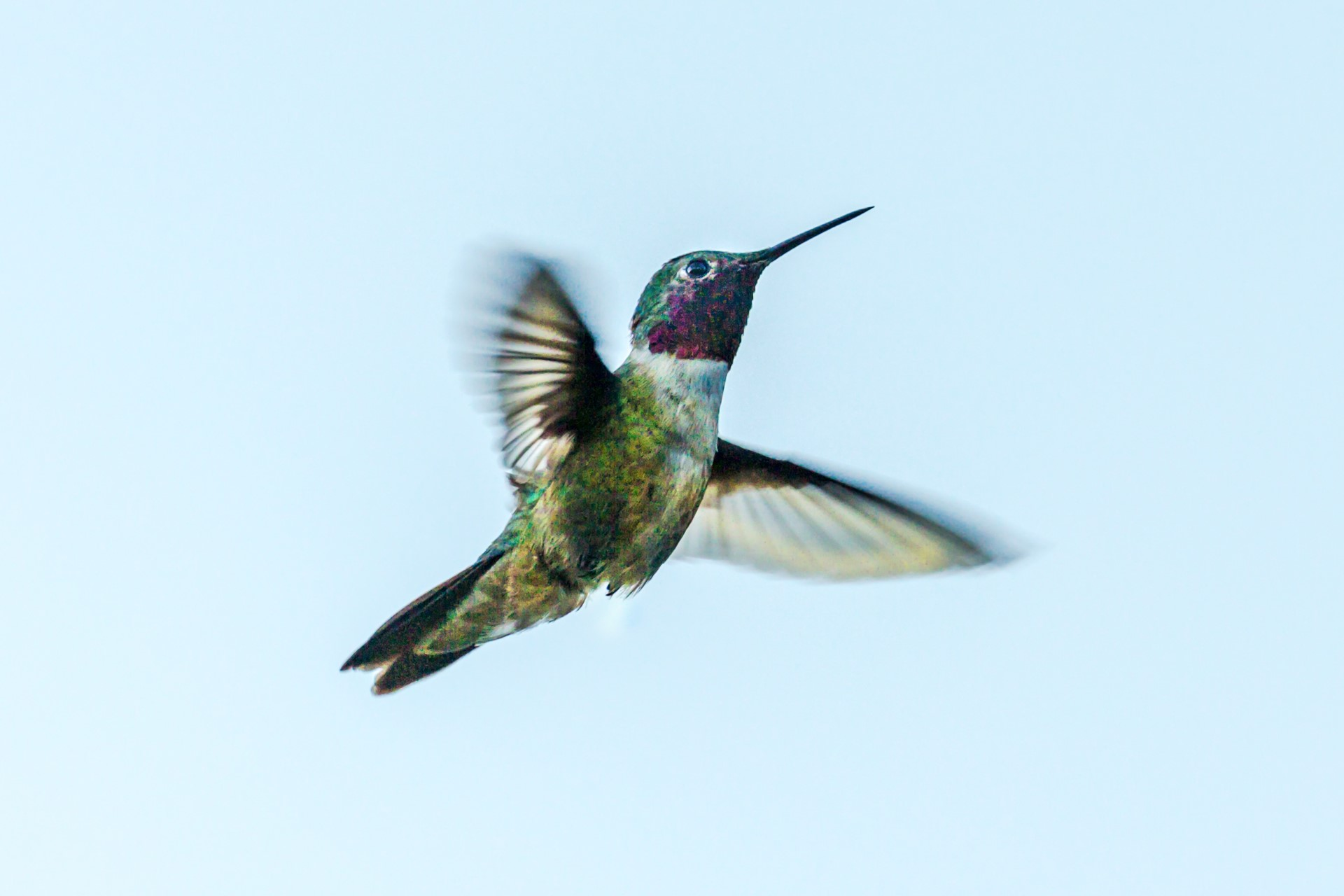 Why Are Hummingbirds Important, and How Can Rooftop Gardens Help Them?