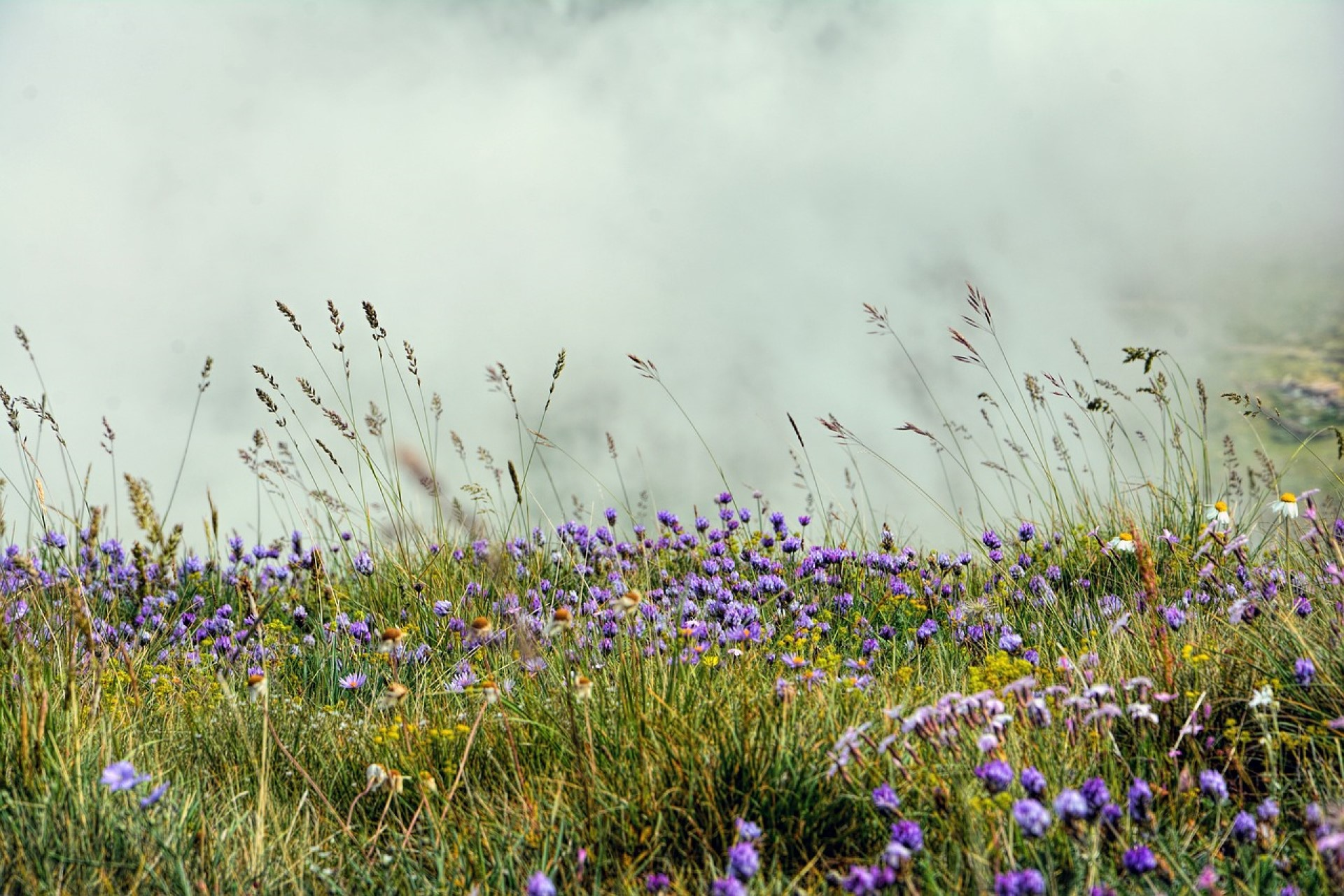 Profile of the Lost American Grasslands: Where They Went and How to Bring Them Back