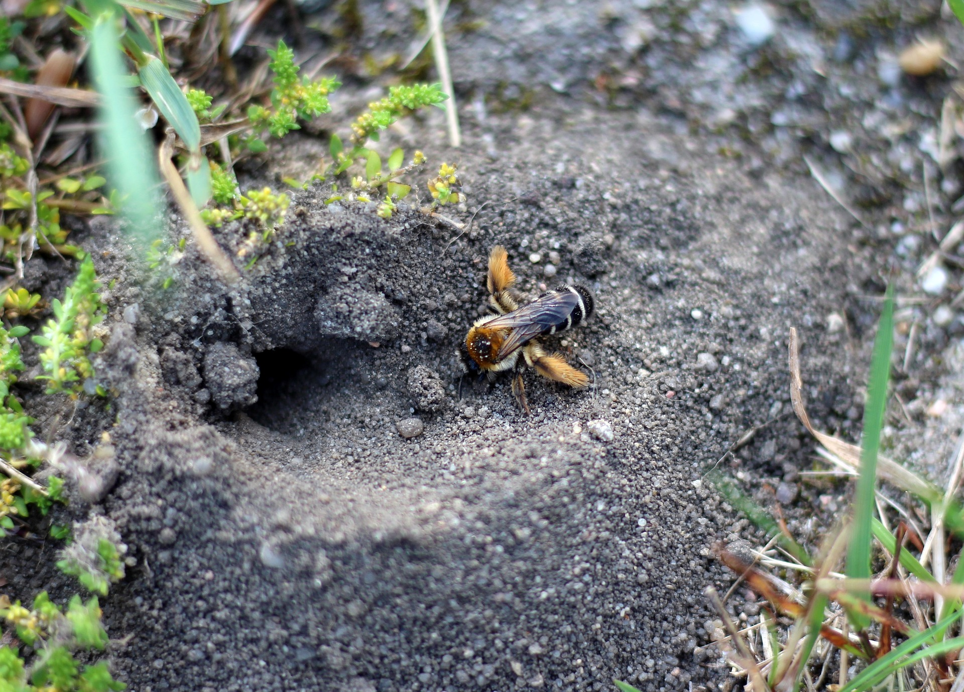 How to Create Nesting Habitat for Native Pollinators