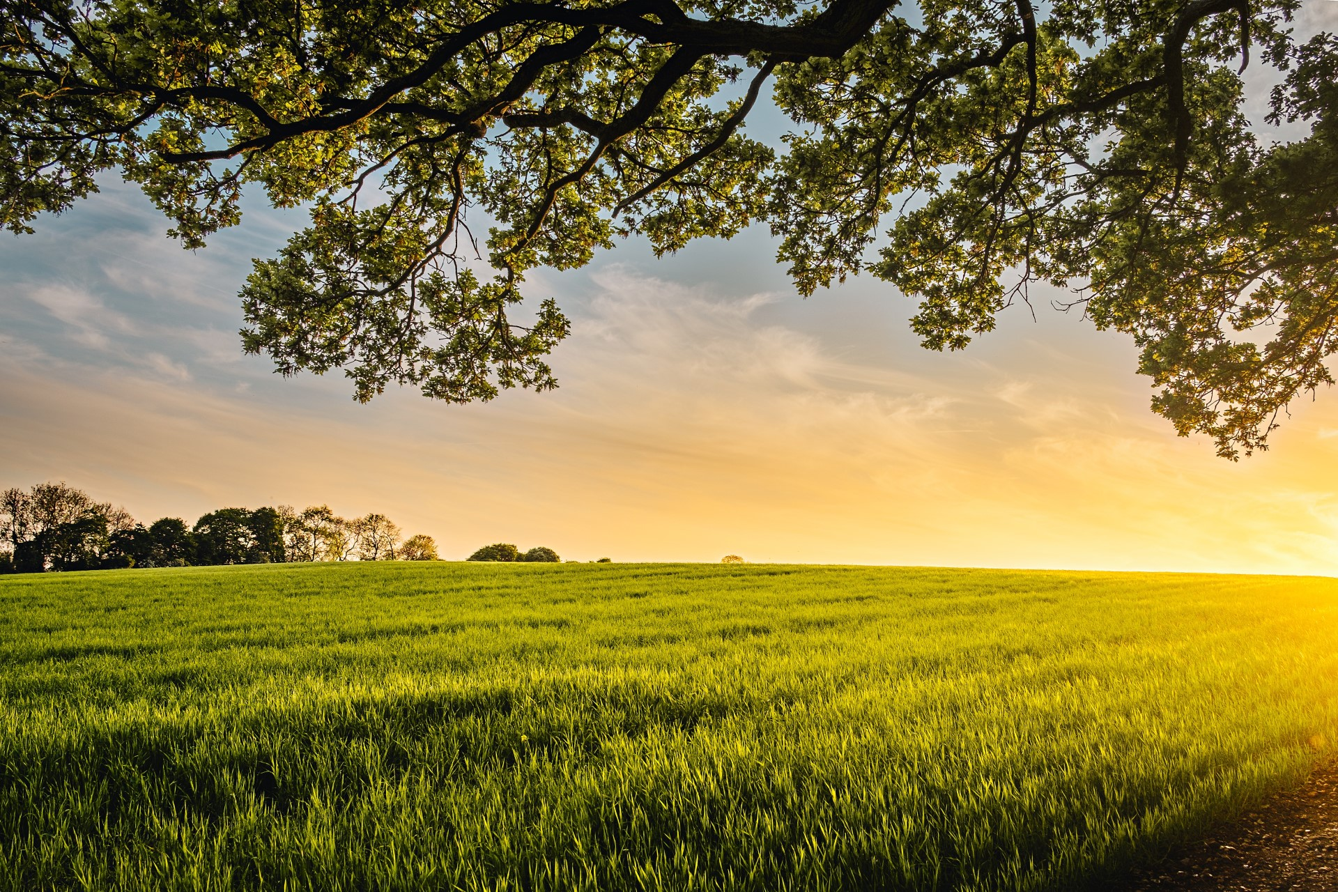 SPOTLIGHT on the Healing Powers of Regenerative Agriculture