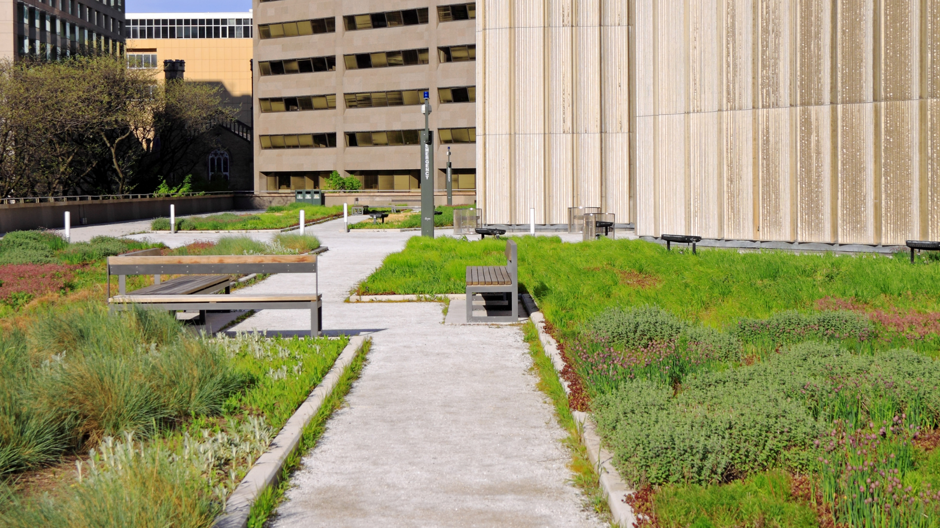 Should You Get a Green Roof?