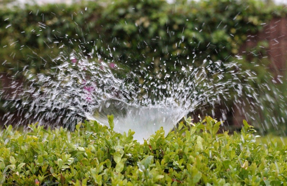 July is Smart Irrigation Month: Here's How You Can Support Water Conservation