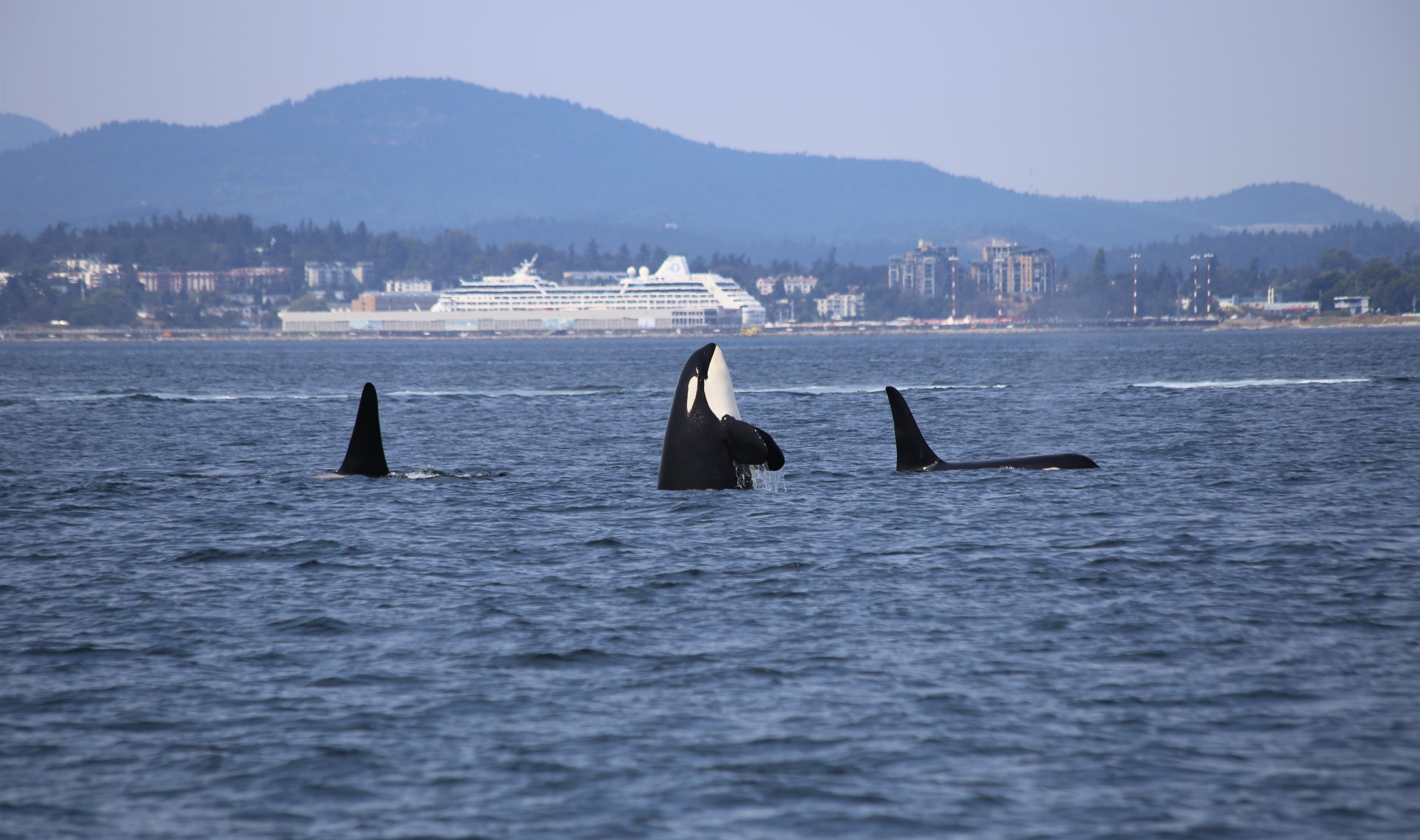 SPOTLIGHT on Bioaccumulation and Why It Matters (Even to Humans)