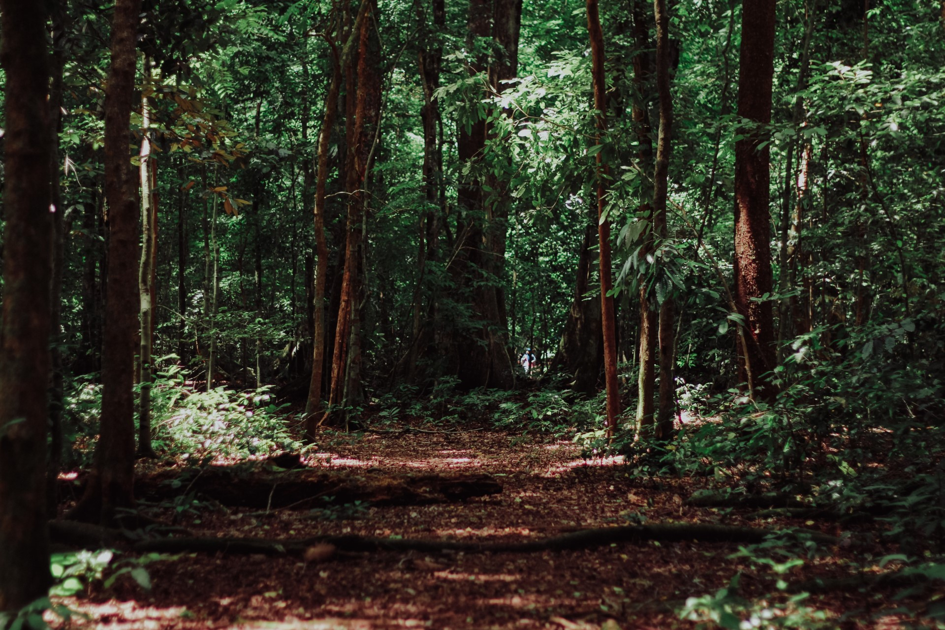 SPOTLIGHT: What Is Forest Bathing and Why Aren't You Doing It