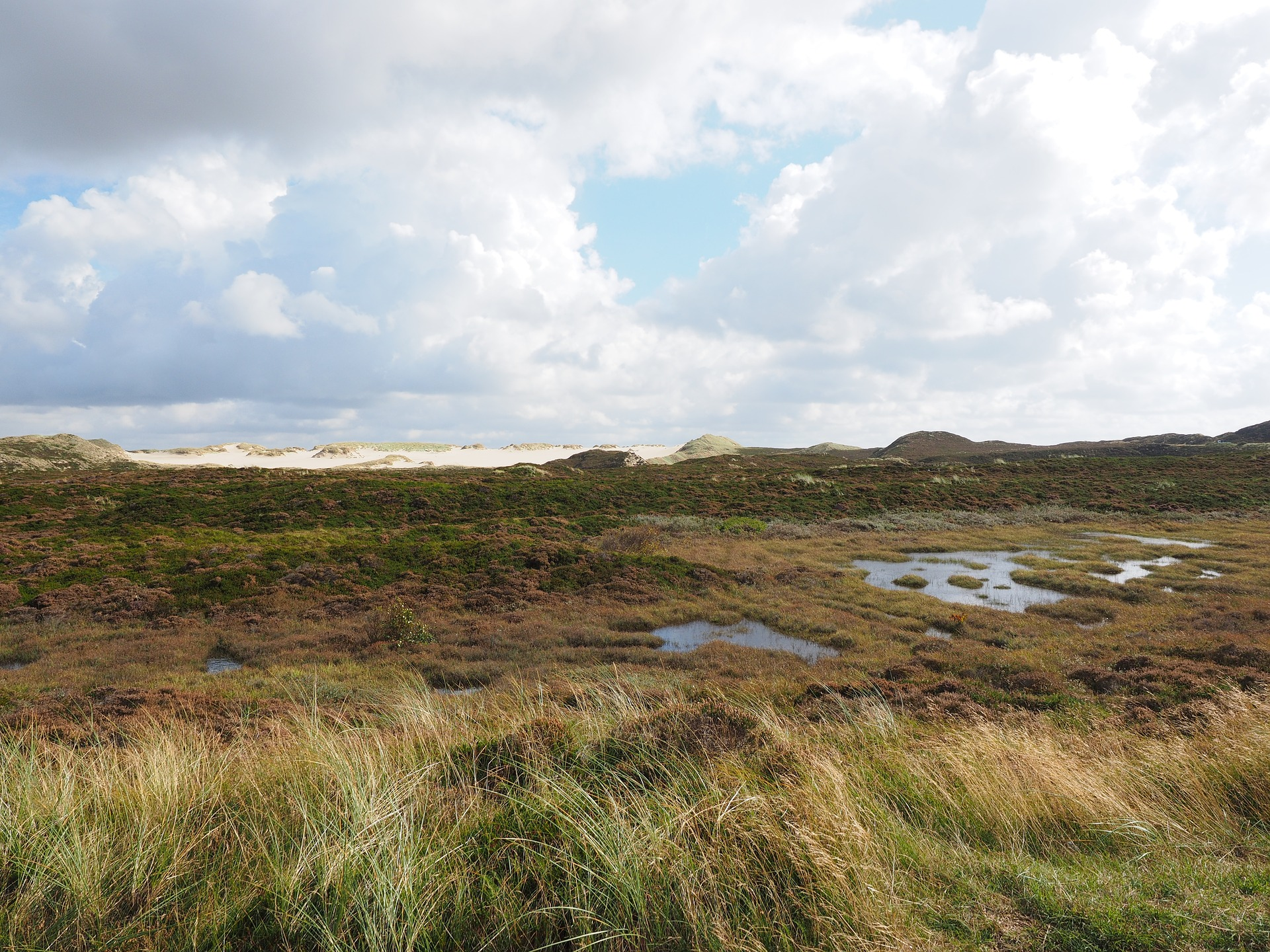 What Is Peat and Why Should We Protect It?