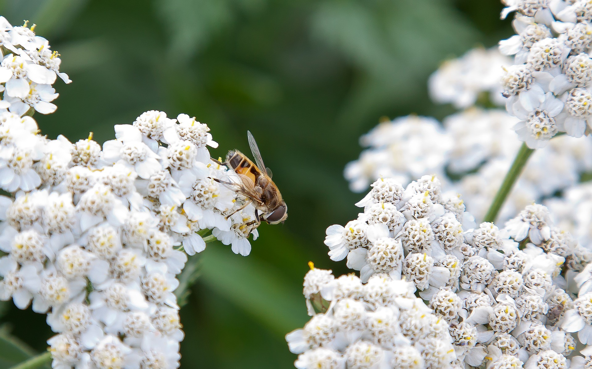 SPOTLIGHT: Why Wild Pollinators Are Way More Important Than You Think